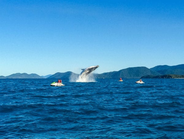 Whale Wjt 1 Sm